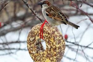 Корм для диких птиц