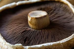 Май – грибы Портобелло