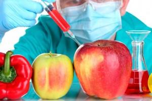 Влияние ГМО на организм человека