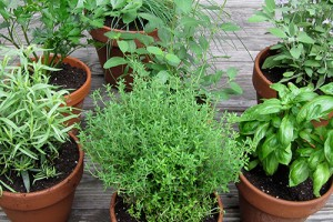 Выращиваем травы на подоконнике